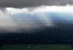 Brezilyada Amazondaki ormansızlaşma salgın döneminde artış gösterdi