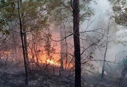 Antalyanın Serik ilçesinde orman yangını