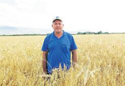 Buğday hasadı sevindirdi