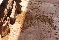 Tırtıl istilasına uğrayan köylerde kuş, keklik ve karıncalarla önlem alınacak