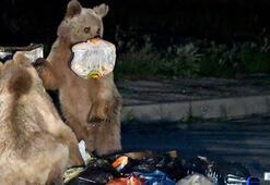 Sarıkamışta yavrularıyla beraber sokakta gezinen ayı gülümsetti