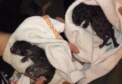 Muğlada yangın İçeride kalan kediler kurtarıldı