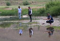 Yavru inci kefallerinin, Van Gölüne dönüş göçü başladı