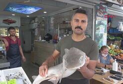 Muğlada köpek balığı yakalandı Boyu 2.5 metre