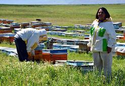 Muşlu kadın arılarına çocukları gibi bakıyor