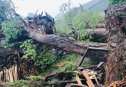 Orduda şiddetli fırtına Ağaçlar yerinden söküldü