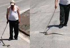 Yola inen yılan telef olmasın diye böyle mücadele verdi