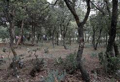 Son dakika... 99 yıl önce yakılarak öldürülen 83 Türkün mezarı tespit edildi