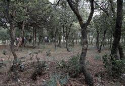 Denizlide 99 yıl önce yakılarak öldürülen 83 Türkün mezarları bulundu