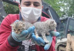 Bingöldeki depremden 5 gün sonra 2 kedi yavrusu enkazdan sağ  çıkarıldı