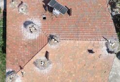 Samsundaki bir evin çatısında 25 leylek yaşıyor