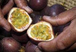 Türkiyede kilosu 360 lira Çarkıfelek meyvesine yoğun talep