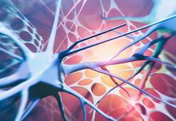 ALS hastalığına fren olacak ilaç yolda