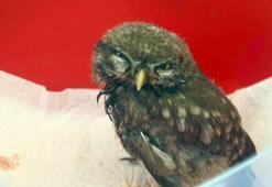 Aydında yaralı bulunan yavru baykuş tedaviye alındı
