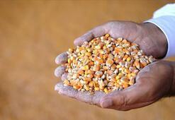 Hububat ve bakliyat sektöründen 5 ayda 2,9 milyar dolarlık ihracat