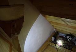 Son dakika... Kocaelide kedi caminin minberinde doğum yaptı, imam sahip çıktı