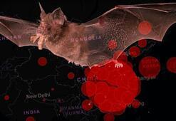 Son dakika: En yetkili isimden dünyayı şoke eden corona virüs uyarısı