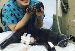Doğum yapamayan kedi sezaryen ile 5 yavru dünyaya getirdi