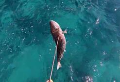 Çekim yaparken balon balığı parmağını koparıyordu