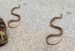 Son dakika...Isparta'da tavuk ve civcivi telef eden yılan yakalandı