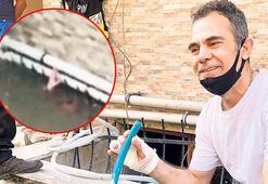 Son dakika haberler: Mucize Davaro'yu hatırlayıp hayat kurtardı