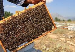 Kırıkkalede yetiştirilen ana arılar ülke geneline satılabilecek