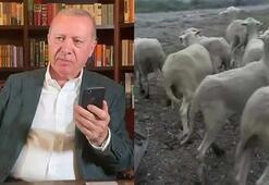 Cumhurbaşkanı Erdoğan'dan 16 koyun