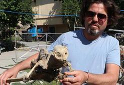 Bodrumda odun ararken hayvan fosili buldu