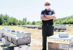 Verimli ve sakin, yeni nesil arılar üretiliyor