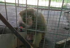 Oto galeri maymun bahçesi çıktı...