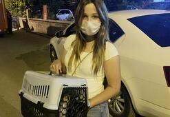 Genç kız kedi sesi duyunca, aracın başından 3 saat ayrılmadı