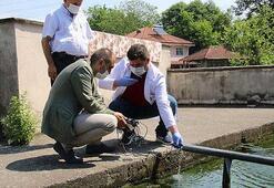 Suyun kokusundaki değişim, köylüleri tedirgin etti