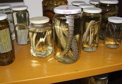 Bakan bir daha bakıyor Profesörün yılan sevgisi...