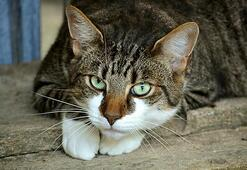 Kediler Ne Yer, Nasıl Beslenir Kedilerin Sevdiği Besinler Nelerdir