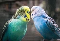 Muhabbet Kuşu Ne Yer, Nasıl Beslenir Muhabbet Kuşlarının Sevdiği Besinler Nelerdir