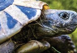 Kaplumbağa Ne Yer, Nasıl Beslenir Kaplumbağaların Sevdiği Besinler Nelerdir