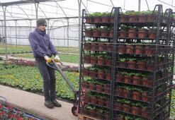 Süs bitkileri üreticileri Muradiye Orman Fidanlığının üretime devam etmesini istiyor