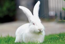 Tavşan Ne Yer, Nasıl Beslenir Tavşanların Sevdiği Besinler Nelerdir