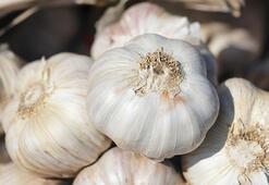 Yemeklerde böyle kullanın: İşte sarımsağın hiç duymadığınız faydaları