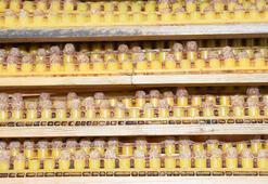 Arı sütünün kilosu 7 bin lira