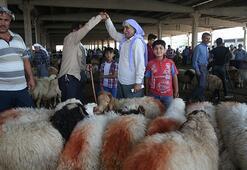 Hayvancılık merkezi Şanlıurfada kurbanlıklar pazara indi
