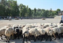 Diyarbakırda canlı hayvan borsası, yeniden hizmete açıldı
