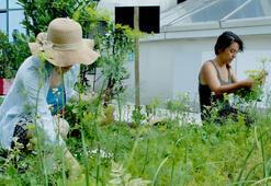 Plazaların ortasında terasta tarım