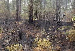 Çekmeköyde 15 dönümlük orman kül oldu