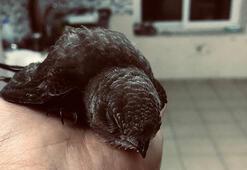 Oluğa sıkışan ebabil kuşunu itfaiye kurtardı