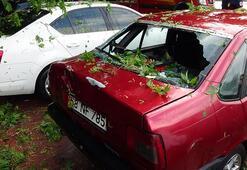 İzmit'te faciadan dönüldü Ağaç, park halindeki otomobillerin üzerine devrildi