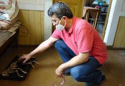 Evde bulduğu hayvan iskeletinin araştırılmasını istiyor