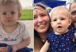ABDde pitbull dehşeti: 17 aylık bebeği öldürdü