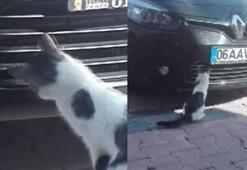 Kedinin serçe avı