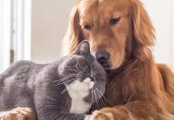 Köpek Cinsleri Ve İsimleri Nelerdir Kedilerin Türleri İle Özellikleri